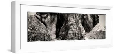 Awesome South Africa Collection Panoramic - Close-Up of Elephant II-Philippe Hugonnard-Framed Photographic Print