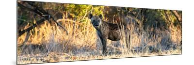 Awesome South Africa Collection Panoramic - Hyena at Sunrise-Philippe Hugonnard-Mounted Photographic Print