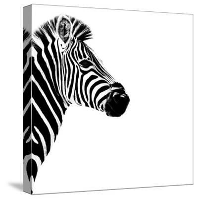 Safari Profile Collection - Zebra Portrait White Edition III-Philippe Hugonnard-Stretched Canvas Print