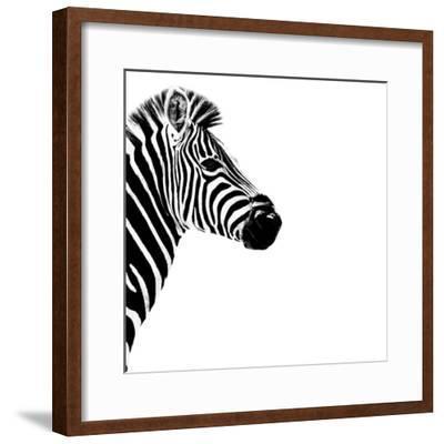 Safari Profile Collection - Zebra Portrait White Edition III-Philippe Hugonnard-Framed Photographic Print