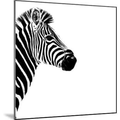 Safari Profile Collection - Zebra Portrait White Edition III-Philippe Hugonnard-Mounted Photographic Print