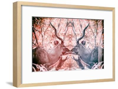 Awesome South Africa Collection - Reflection of Greater Kudu - Red & Dimgray-Philippe Hugonnard-Framed Photographic Print