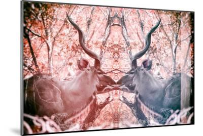 Awesome South Africa Collection - Reflection of Greater Kudu - Red & Dimgray-Philippe Hugonnard-Mounted Photographic Print