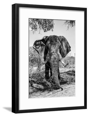 Awesome South Africa Collection B&W - Elephant Portrait V-Philippe Hugonnard-Framed Photographic Print