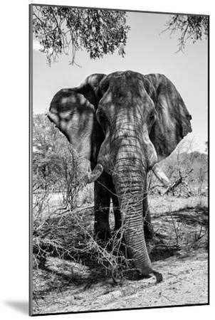 Awesome South Africa Collection B&W - Elephant Portrait V-Philippe Hugonnard-Mounted Photographic Print