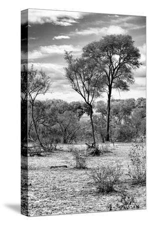 Awesome South Africa Collection B&W - African Landscape V-Philippe Hugonnard-Stretched Canvas Print