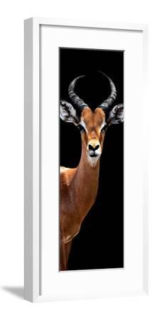 Safari Profile Collection - Antelope Black Edition IV-Philippe Hugonnard-Framed Photographic Print