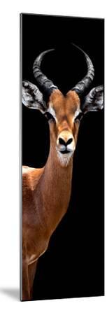 Safari Profile Collection - Antelope Black Edition IV-Philippe Hugonnard-Mounted Photographic Print