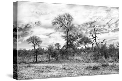Awesome South Africa Collection B&W - African Landscape II-Philippe Hugonnard-Stretched Canvas Print