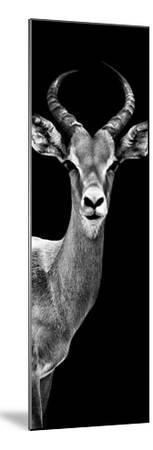 Safari Profile Collection - Antelope Black Edition III-Philippe Hugonnard-Mounted Photographic Print