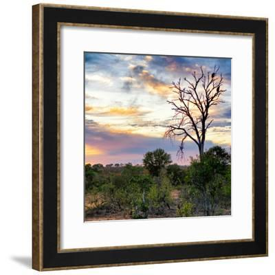 Awesome South Africa Collection Square - Sunrise in Savannah-Philippe Hugonnard-Framed Photographic Print