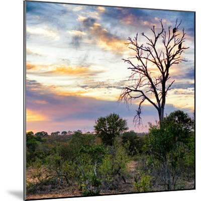 Awesome South Africa Collection Square - Sunrise in Savannah-Philippe Hugonnard-Mounted Photographic Print