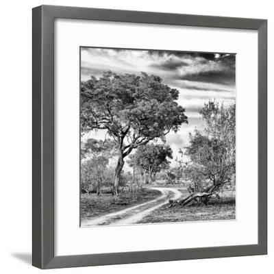 Awesome South Africa Collection Square - African Safari Road B&W-Philippe Hugonnard-Framed Photographic Print