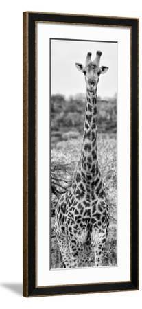 Awesome South Africa Collection Panoramic - Giraffe Portrait III B&W-Philippe Hugonnard-Framed Photographic Print