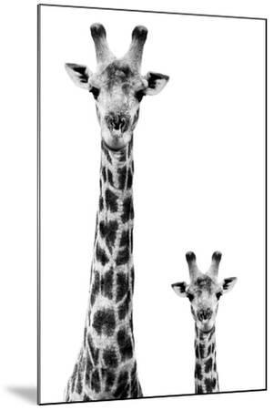 Safari Profile Collection - Giraffe and Baby White Edition II-Philippe Hugonnard-Mounted Premium Photographic Print