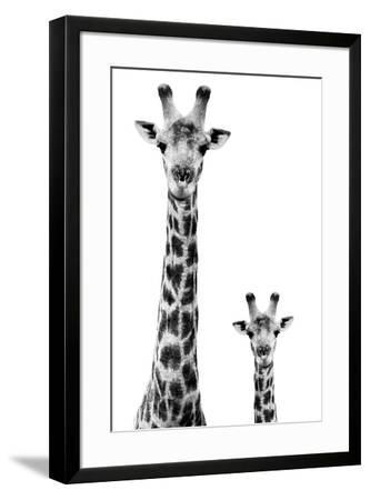 Safari Profile Collection - Giraffe and Baby White Edition II-Philippe Hugonnard-Framed Premium Photographic Print