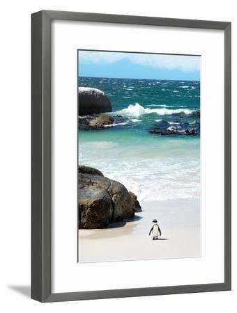 Awesome South Africa Collection - Penguin at Boulders Beach-Philippe Hugonnard-Framed Photographic Print