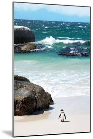 Awesome South Africa Collection - Penguin at Boulders Beach-Philippe Hugonnard-Mounted Photographic Print