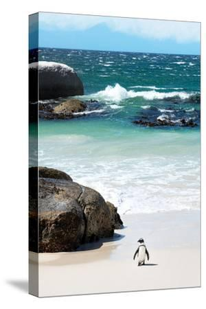 Awesome South Africa Collection - Penguin at Boulders Beach-Philippe Hugonnard-Stretched Canvas Print