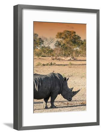 Awesome South Africa Collection - Black Rhinoceros and Savanna Landscape at Sunset I-Philippe Hugonnard-Framed Photographic Print