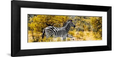 Awesome South Africa Collection Panoramic - Zebra Profile with Yellow Savanna-Philippe Hugonnard-Framed Photographic Print