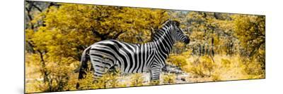 Awesome South Africa Collection Panoramic - Zebra Profile with Yellow Savanna-Philippe Hugonnard-Mounted Photographic Print