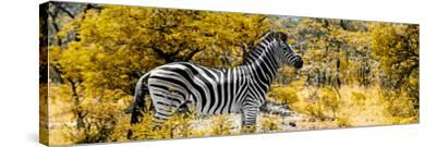 Awesome South Africa Collection Panoramic - Zebra Profile with Yellow Savanna-Philippe Hugonnard-Stretched Canvas Print
