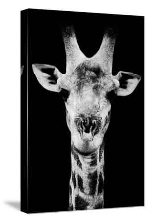 Safari Profile Collection - Portrait of Giraffe Black Edition V-Philippe Hugonnard-Stretched Canvas Print