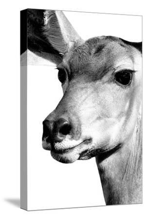 Safari Profile Collection - Portrait of Impala White Edition-Philippe Hugonnard-Stretched Canvas Print