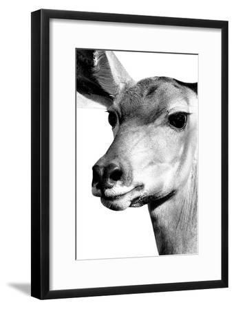 Safari Profile Collection - Portrait of Impala White Edition-Philippe Hugonnard-Framed Photographic Print