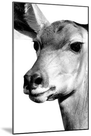 Safari Profile Collection - Portrait of Impala White Edition-Philippe Hugonnard-Mounted Photographic Print