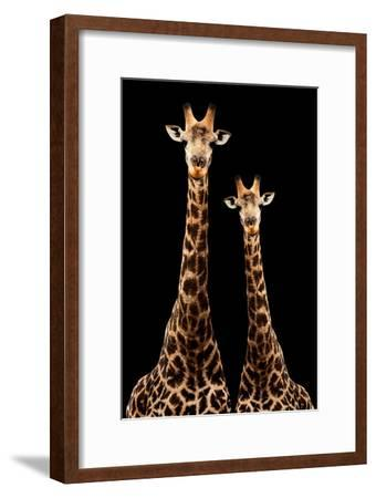 Safari Profile Collection - Two Giraffes Black Edition-Philippe Hugonnard-Framed Photographic Print