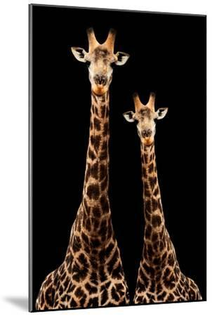 Safari Profile Collection - Two Giraffes Black Edition-Philippe Hugonnard-Mounted Photographic Print