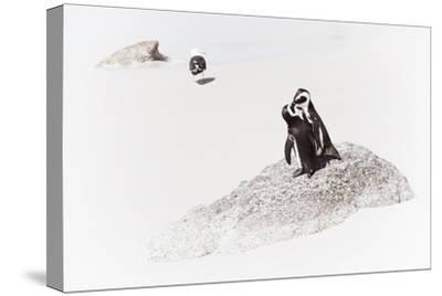 Awesome South Africa Collection - Penguin Lovers II-Philippe Hugonnard-Stretched Canvas Print