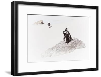 Awesome South Africa Collection - Penguin Lovers II-Philippe Hugonnard-Framed Photographic Print