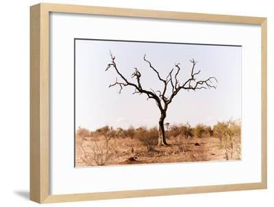Awesome South Africa Collection - Savanna Tree IX-Philippe Hugonnard-Framed Photographic Print