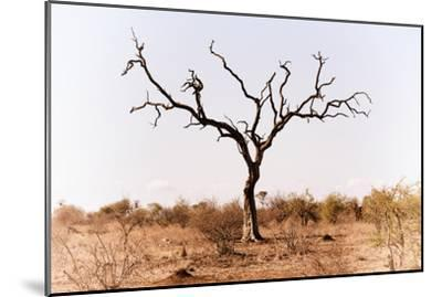 Awesome South Africa Collection - Savanna Tree IX-Philippe Hugonnard-Mounted Photographic Print
