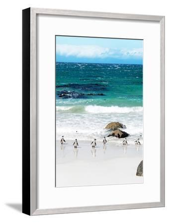 Awesome South Africa Collection - African Penguins at Boulders Beach V-Philippe Hugonnard-Framed Photographic Print
