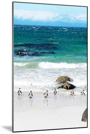 Awesome South Africa Collection - African Penguins at Boulders Beach V-Philippe Hugonnard-Mounted Photographic Print