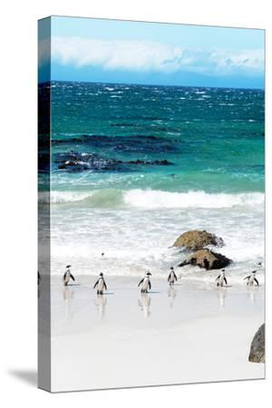 Awesome South Africa Collection - African Penguins at Boulders Beach V-Philippe Hugonnard-Stretched Canvas Print
