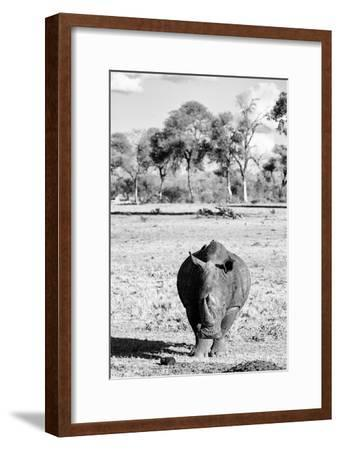 Awesome South Africa Collection B&W - White Rhino-Philippe Hugonnard-Framed Photographic Print