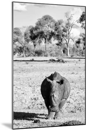 Awesome South Africa Collection B&W - White Rhino-Philippe Hugonnard-Mounted Photographic Print