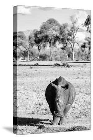 Awesome South Africa Collection B&W - White Rhino-Philippe Hugonnard-Stretched Canvas Print