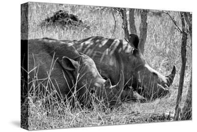 Awesome South Africa Collection B&W - Two White Rhino slepping-Philippe Hugonnard-Stretched Canvas Print