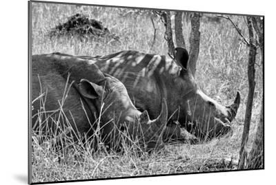 Awesome South Africa Collection B&W - Two White Rhino slepping-Philippe Hugonnard-Mounted Photographic Print