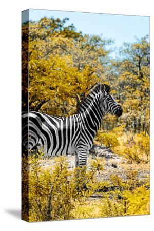 Awesome South Africa Collection - Burchell's Zebra VII-Philippe Hugonnard-Stretched Canvas Print