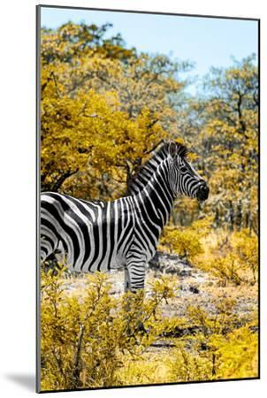 Awesome South Africa Collection - Burchell's Zebra VII-Philippe Hugonnard-Mounted Photographic Print