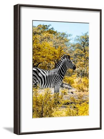 Awesome South Africa Collection - Burchell's Zebra VII-Philippe Hugonnard-Framed Photographic Print