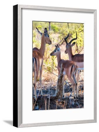 Awesome South Africa Collection - Impala Family I-Philippe Hugonnard-Framed Photographic Print