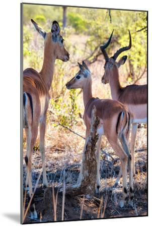 Awesome South Africa Collection - Impala Family I-Philippe Hugonnard-Mounted Photographic Print
